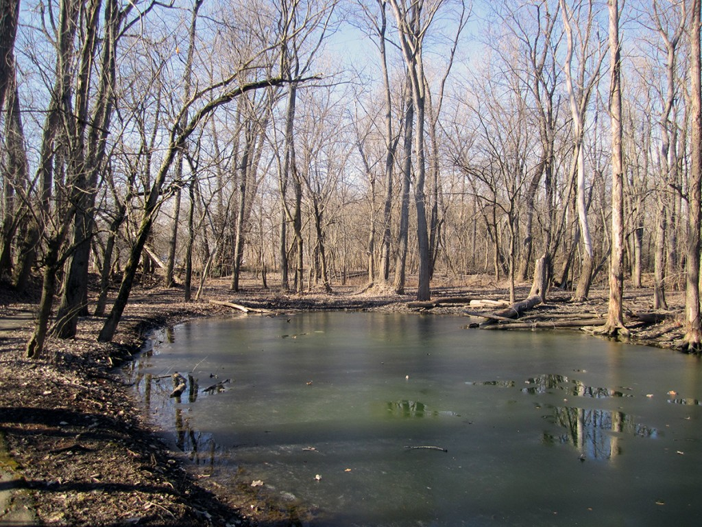 March 1st. Swampy area in Columbus,, IN.