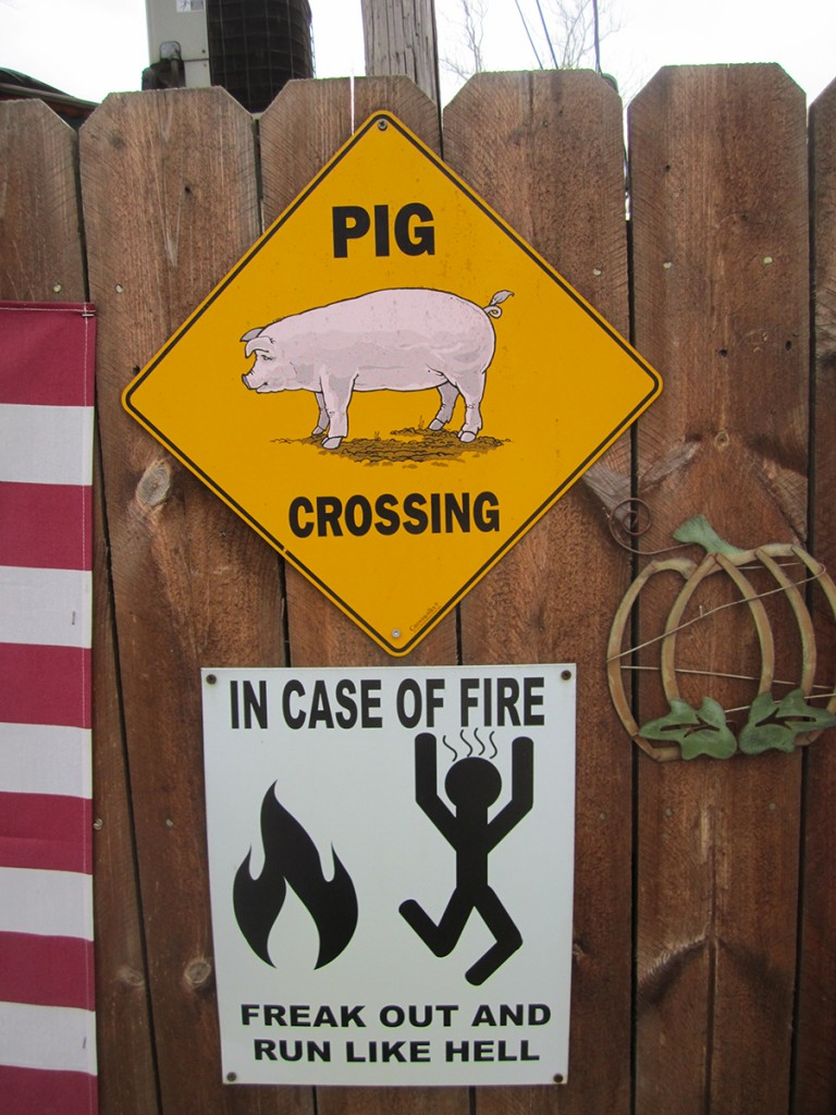 March 2nd. Pig crossing.