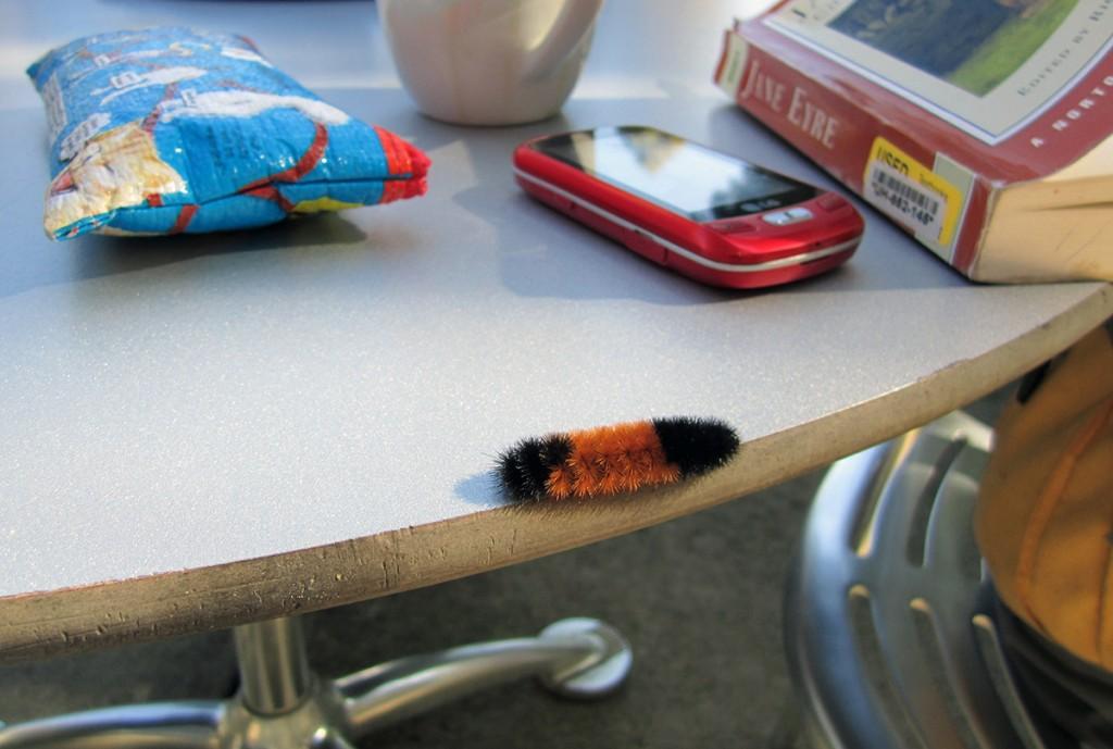 April 7th: Furry Caterpillar