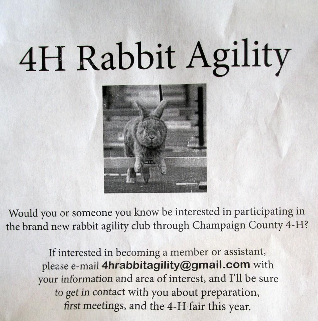 April 2nd: 4H Rabbit Agility.