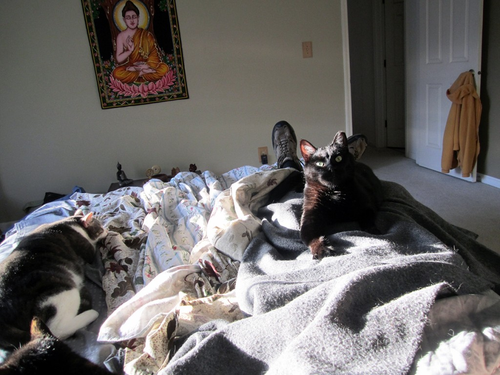 April 26tht: Kitty and Doogie and an after-work nap.
