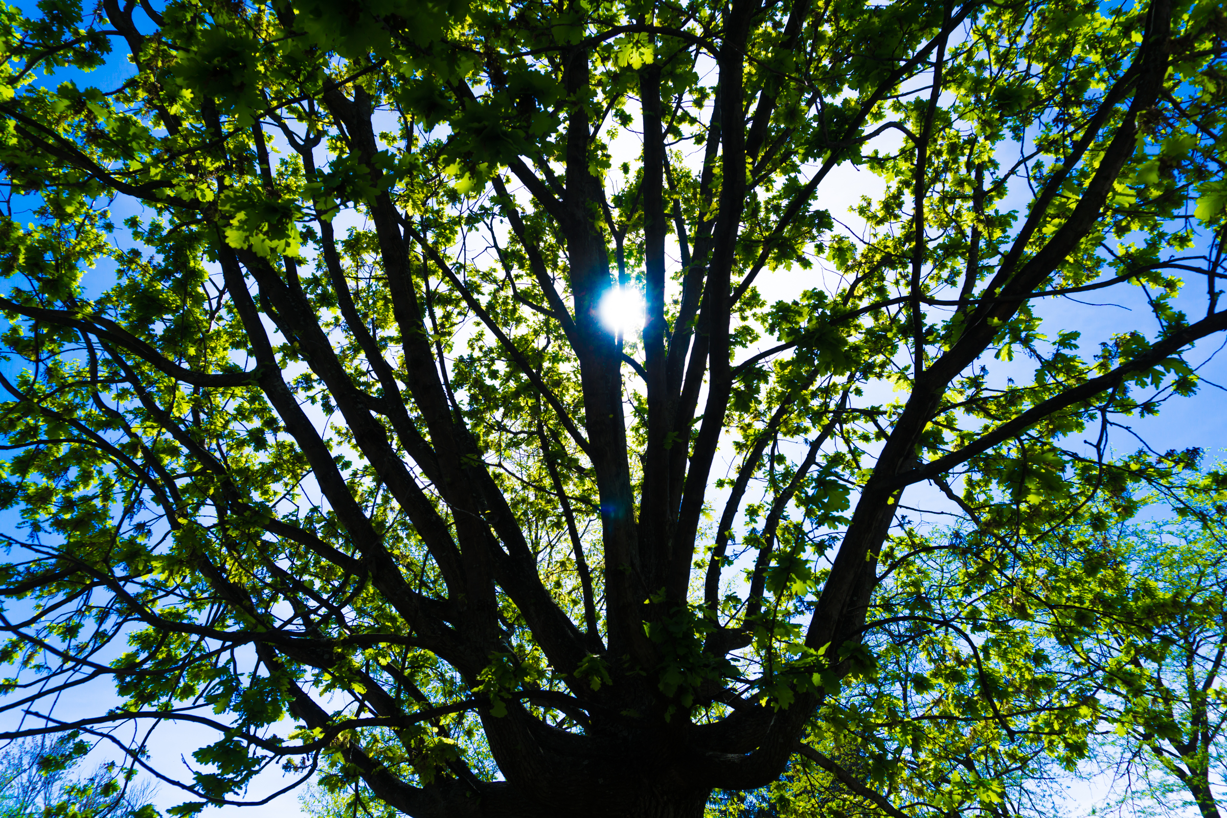 April 24th: Tree
